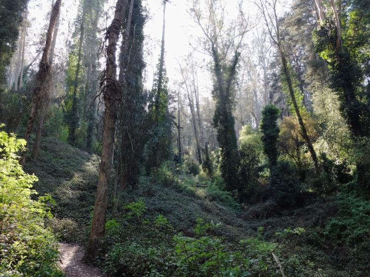 Mt Sutro woods 5