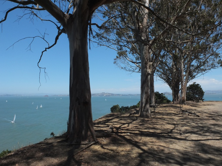 Angel Island - view with trees