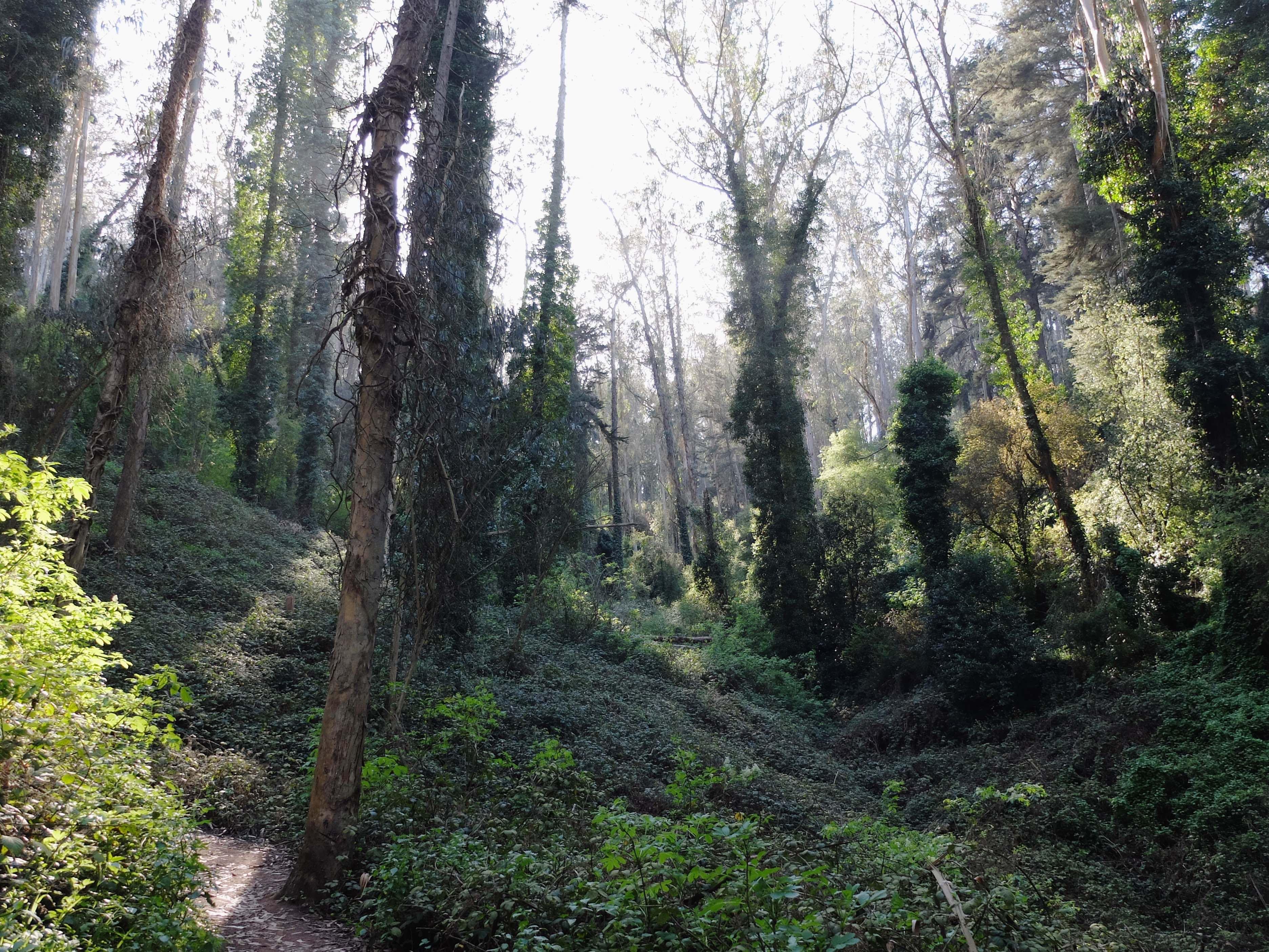 Mt Sutro woods 5 copy
