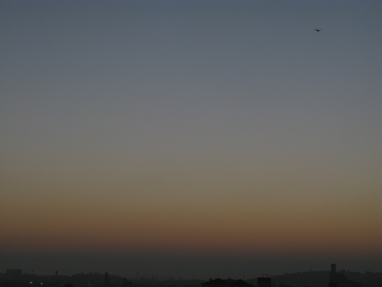 sky-21-1-south-east-bird-copy