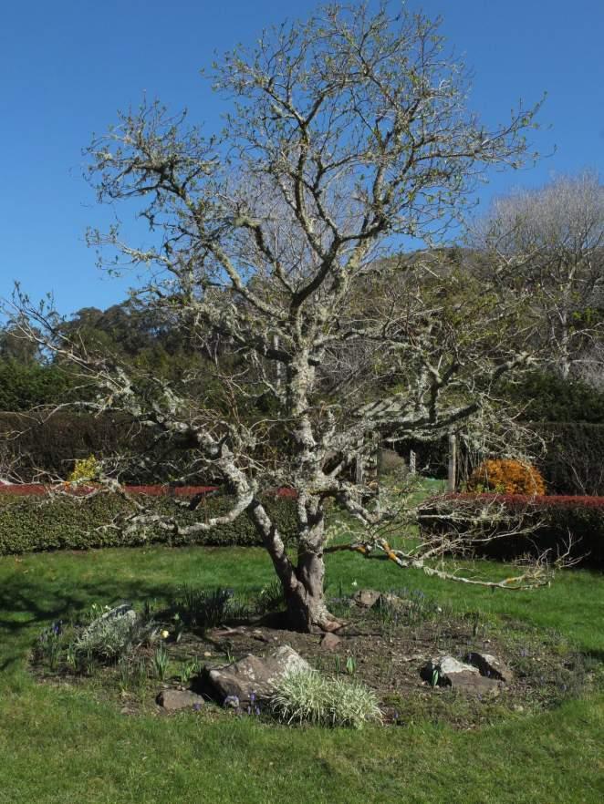 ggf-rose-garden-tree-copy
