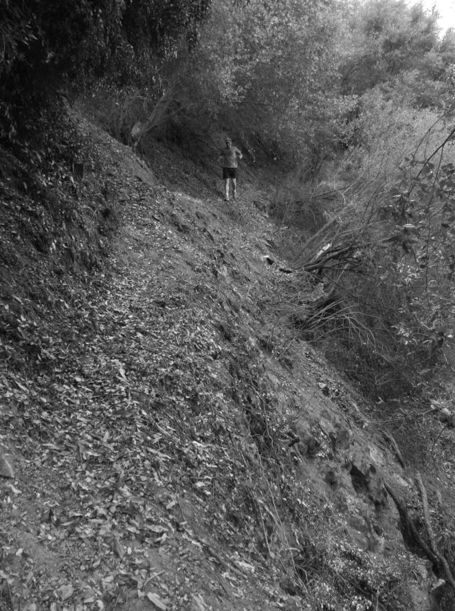 Bryan Tony Trail