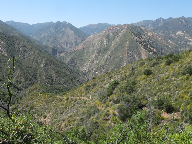 Tony Trail - further down trail.jpeg